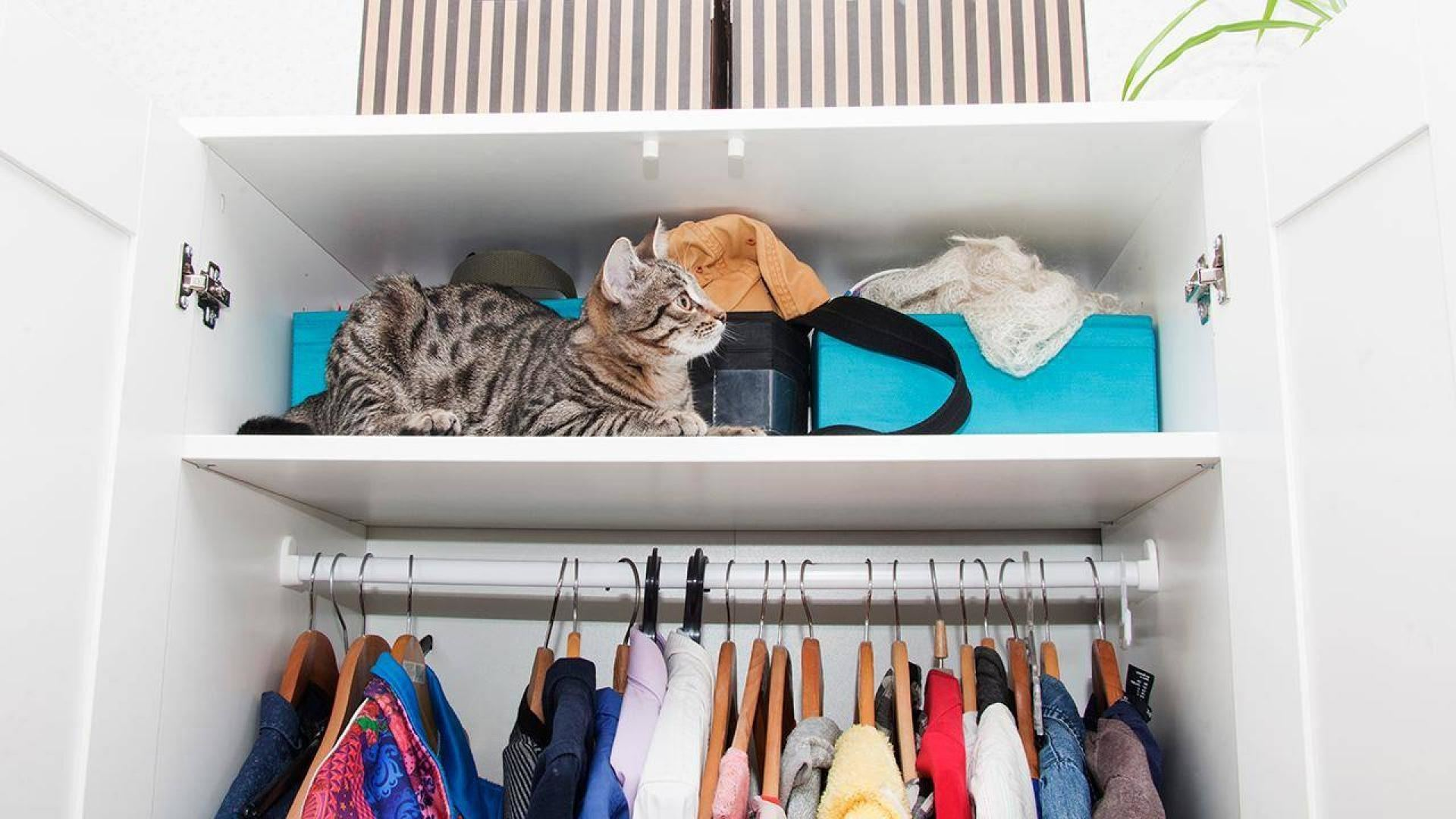 We're often quizzed about the best, and though  most of us are making do with the tiny closets that came with our  apartments (plus