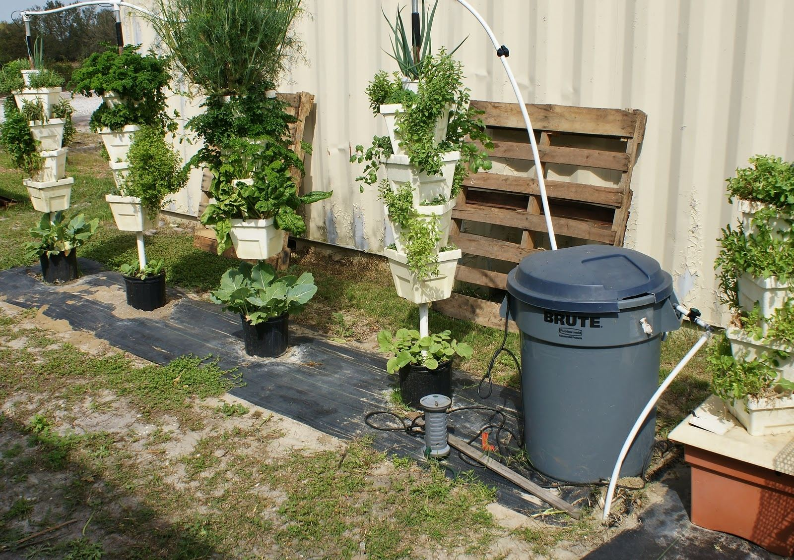 Backyard Vegetable Garden Ideas Design With Home Decorating How